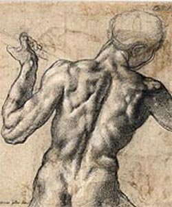 Michelangelo Buonarroti<EM>Male Nude Seen From the Back With a Flag Staff</EM>, around 1504Black chalk, heightened in white© Albertina, Vienna