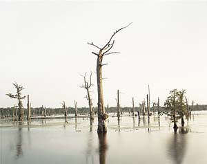 Richard Misrach: <EM>Cypress Swamp, Alligator Bayou, Prairieville, Louisiana</EM>Negative 1998, print 2012