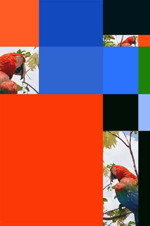 Sergio Vega: Series <EM>Parrot Color Charts</EM>