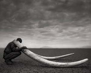 Nick Brandt: <EM>Ranger with Tusks of Killed Elephant</EM>, Amboseli , 2011Archival pigment print