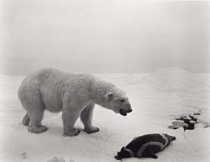 Hiroshi Sugimoto: <EM>Polar Bear</EM>, 1976Gelatin silver printThe J. Paul Getty Museum, purchased with funds provided by the Photographs Council© Hiroshi Sugimoto