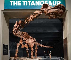 The TitanosaurAmerican Museum of Natural History