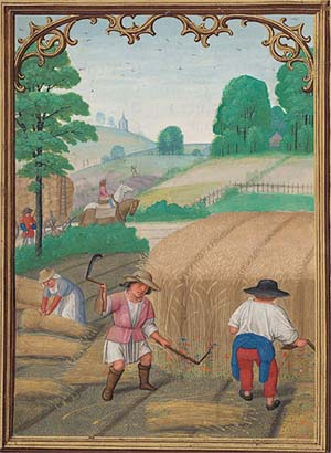 "<EM>August: Reaping Wheat</EM>, ""Da Costa Hours,"" Belgium, Ghent, ca. 1515, illuminated by Simon Bening, The Morgan Library & Museum, MS M.399, fol. 9v, purchased by Pierpont Morgan, 1910. Image courtesy of Akademische Druck- u. Verlagsanstalt, Graz/Austria."